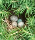 Bird nest picture taken by my grandpa