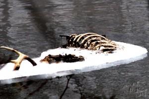 Oh deer John is dead!