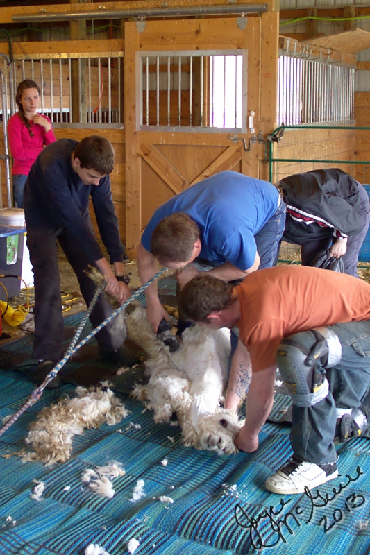 Shearing legs