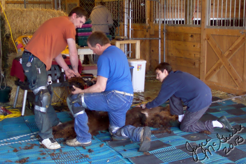 Shearing side
