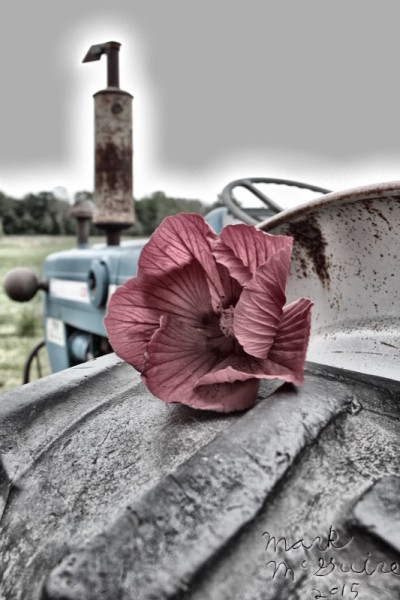 Tractor and flower