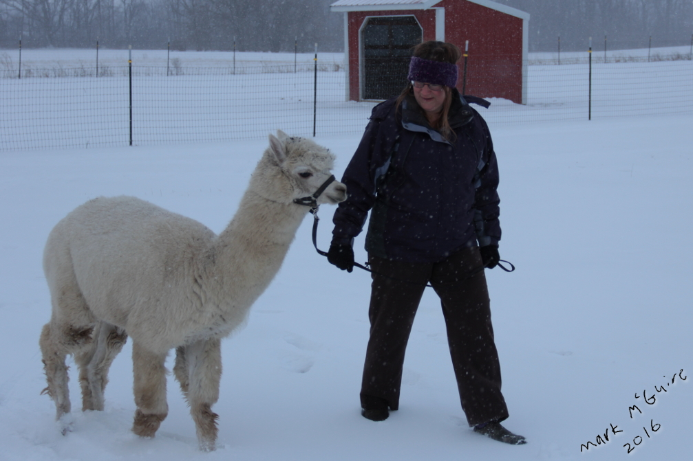Mom and Alpaca